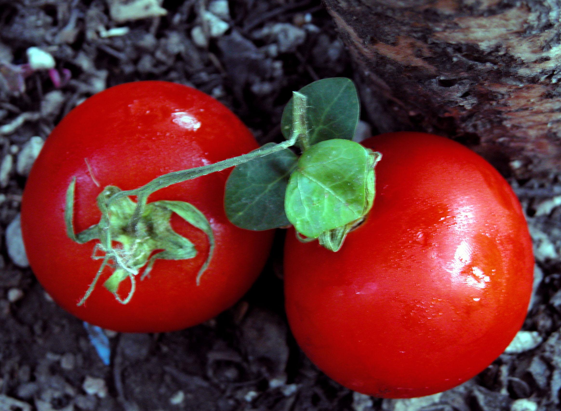 Bolognese Tomaten Soße